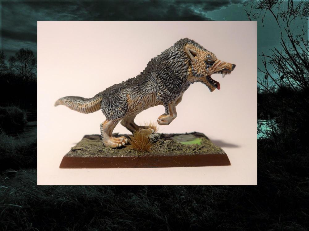Wolf5.thumb.jpg.ff6aecc5963e5314d65560f46a40fcaf.jpg