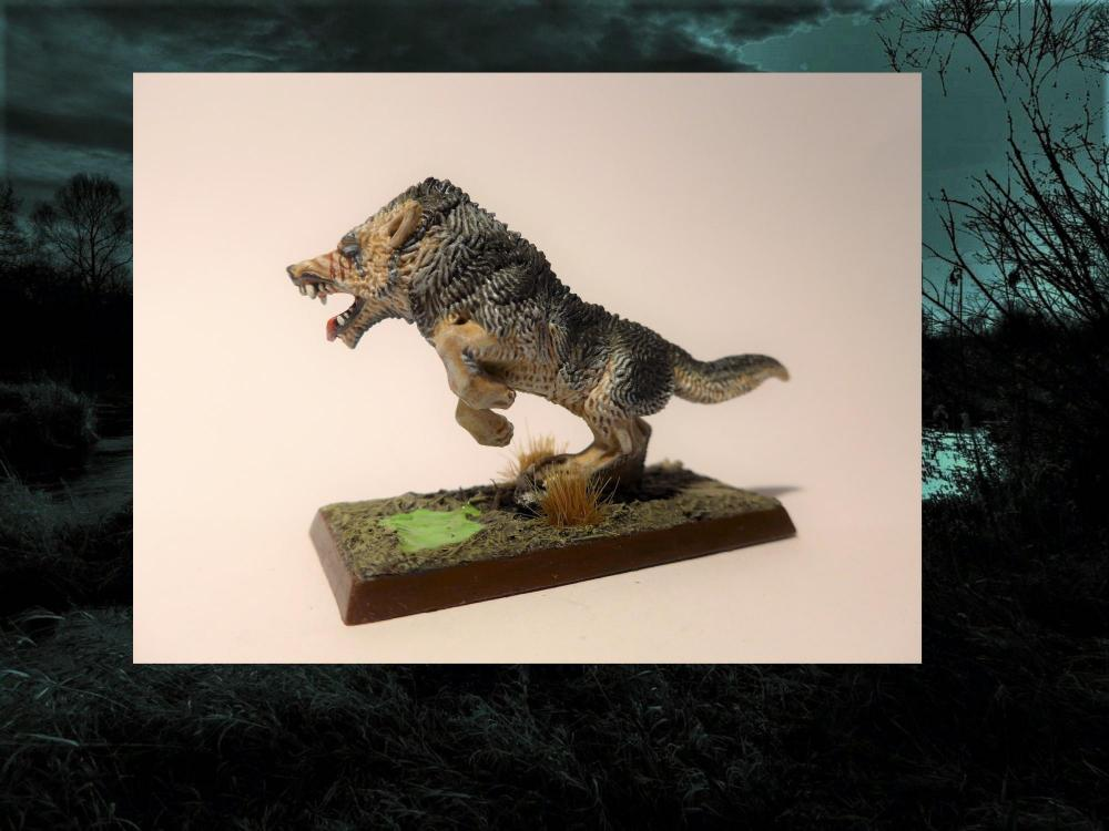 Wolf6.thumb.jpg.ac1865889aea3645f1a8a0b4037a10dd.jpg