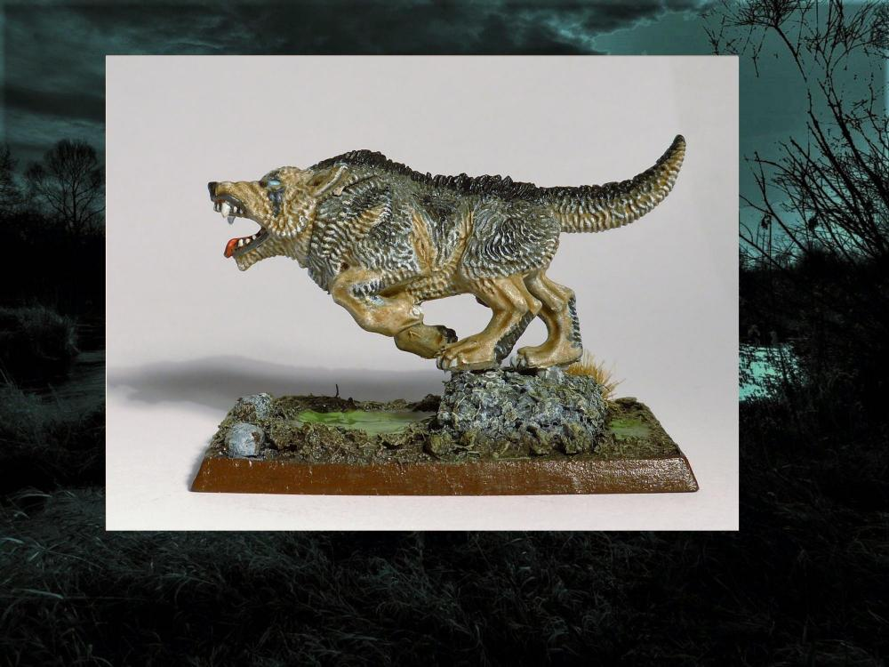 Wolf8.thumb.jpg.3ce16d5974cf1008e2bda105463b9dfb.jpg