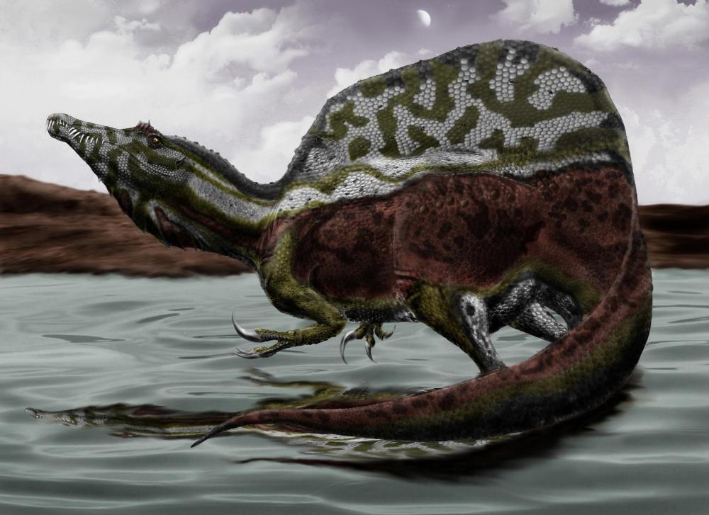 Spinosaurus_durbed.thumb.jpg.e48f6d04f489971169e433b059c96f41.jpg